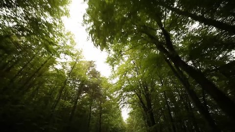 POV video footage of driving in a forest in south tyrol, italy, europe