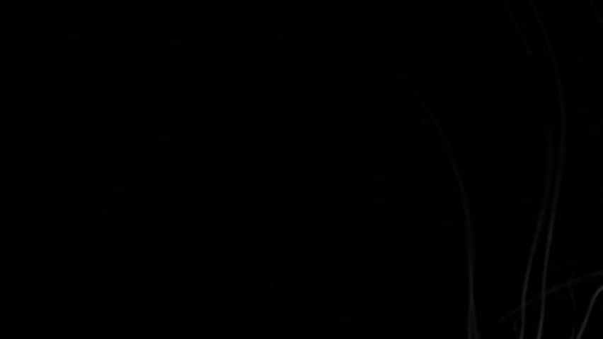 Jellyfish macro - HD | Shutterstock HD Video #550636