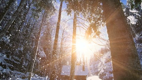 snow falling. winter wonderland. snowing snowy. sunset dusk sunshine. forest trees woods nature. slow motion. winter background. romantic wonderland. beautiful environment