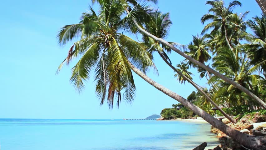 Tropical Paradise at Samui with palm  trees on the beach