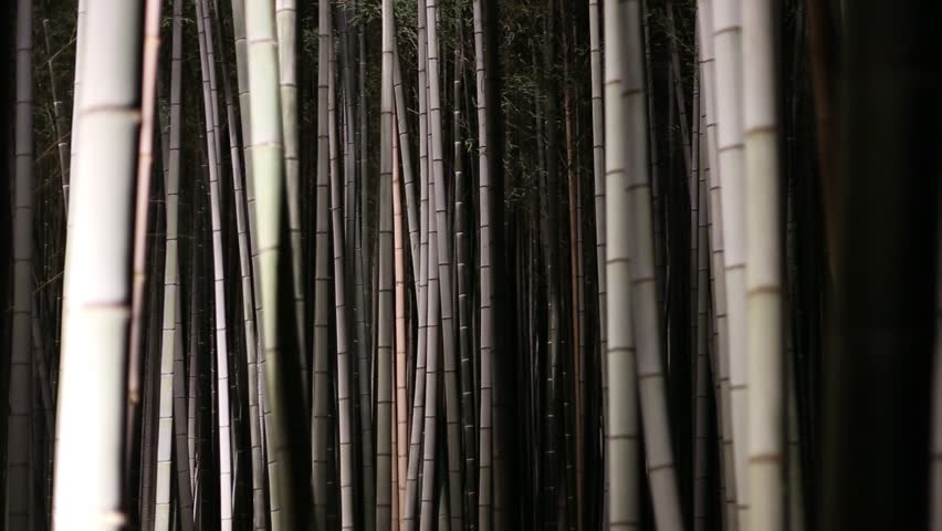Light up at night on the Bamboo forest in Arashiyama, Kyoto, Japan. - HD stock video clip