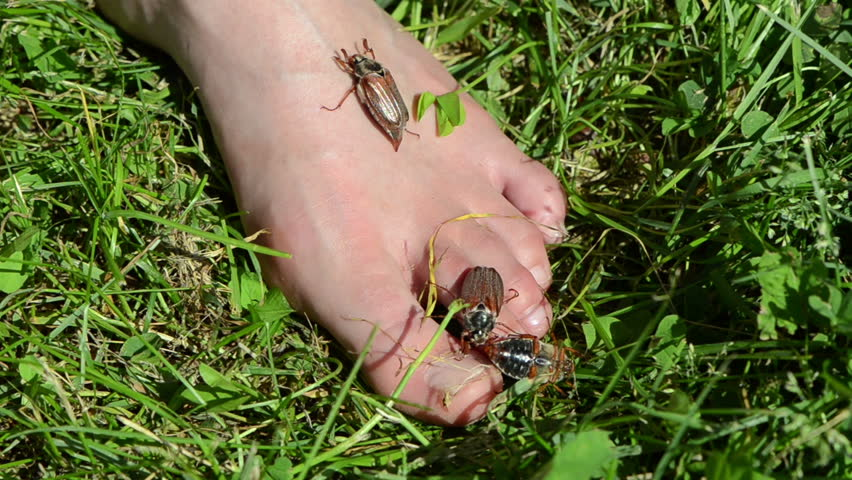 woman bare foot in the grass on her crawls a few bugs man set bunch of big brown beetle