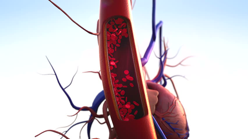 blood vessels, artery shown with a cut out section, High quality rendering with original textures and global illumination, Contraction of blood vessels on a heart background