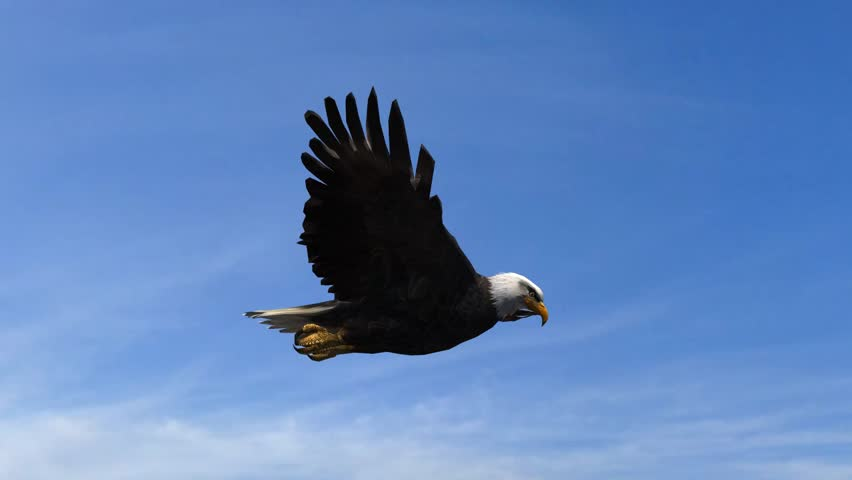 Bald Eagle Flight Close-Up tracking shot #5993258