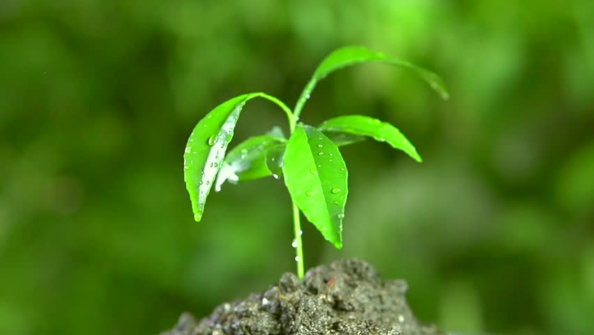 Little tree after rain on green background. Rotation 360. Full HD slow motion 1080p