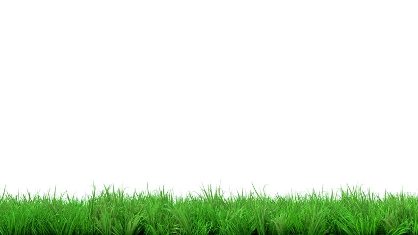 Isolated green grass on white background | Stock Photo | Colourbox