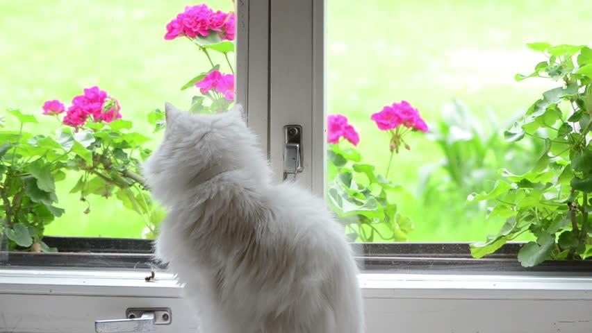 Цветы и кот на окне