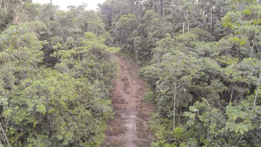 clear forest lands Deforestation: deforestation, clearing or thinning of forests by humans to make the land available for other uses.