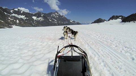 POV Alaskan Husky dogs used for dog sled adventures, USA - POV of husky dog team traversing snow covered high mountain plateau, Alaska, USA