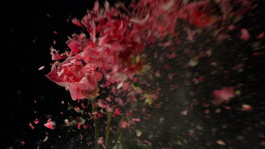 Flower Motion