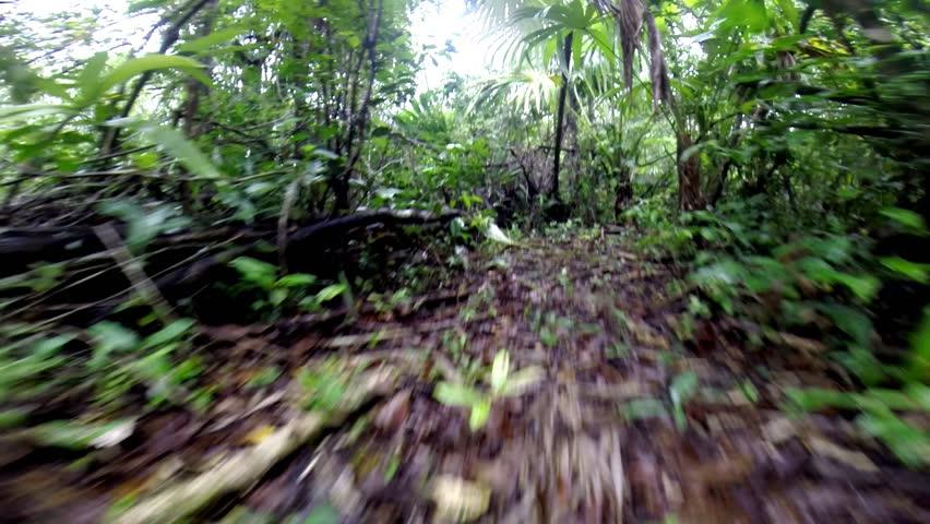 Jungle creature scampering through trail - POV
