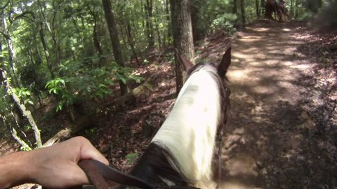 Horseback Riding Point of View on the Forest Trail