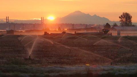 Sunrise Mist, Richmond Cranberry Field. Cranberry field workers arrive at dawn to start work. Richmond, British Columbia, Canada.