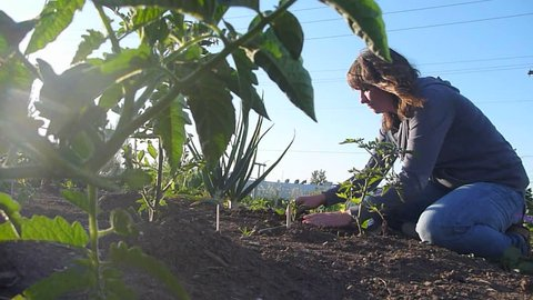 Model released woman in garden planting vegetables on sunny day.