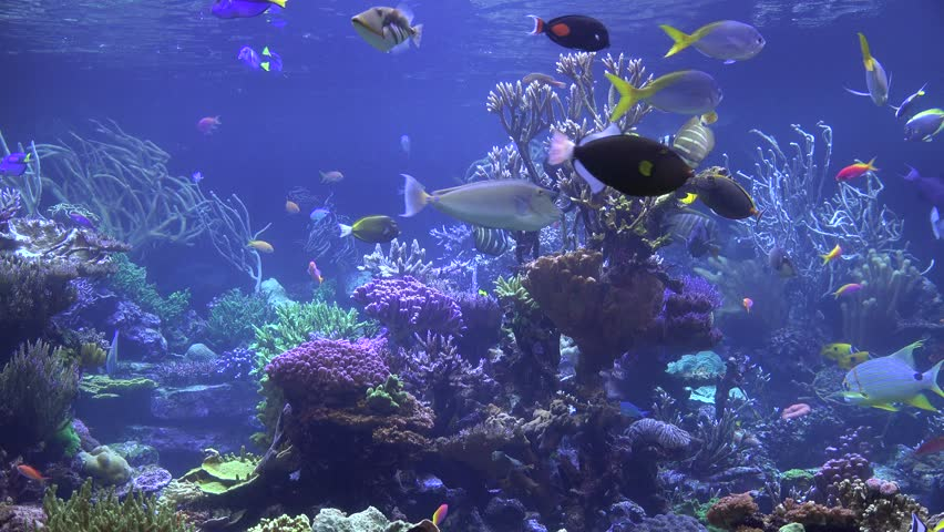 Aquarium Fish Tank Coral Reef Stock Footage Video 100 Royalty