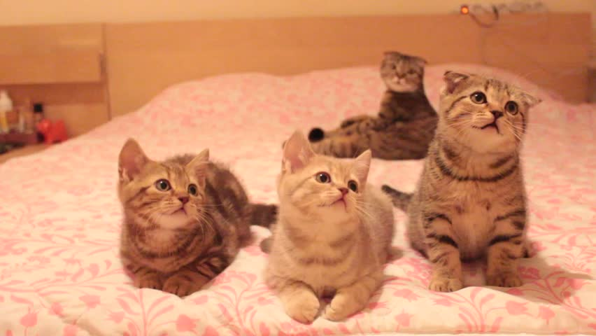 Ozzy Cat Video