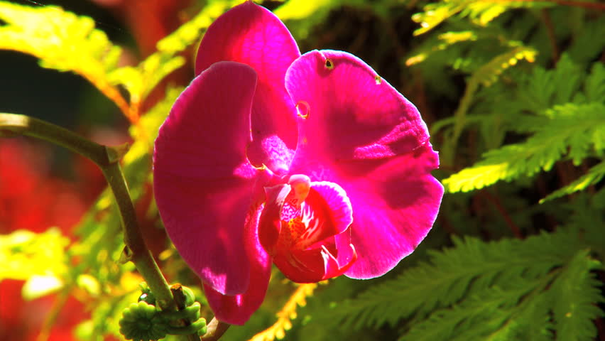 beautiful tropical flowers in environmental rainforest in tight, Beautiful flower
