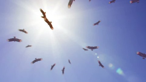 Ominous view of vultures circling overhead on a hot sunny day.