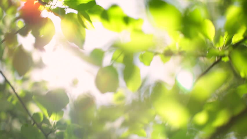 Shining through leaves stock footage video shutterstock - Nature wallpaper editor ...
