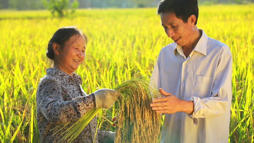 the sleeping giant china agriculture essay