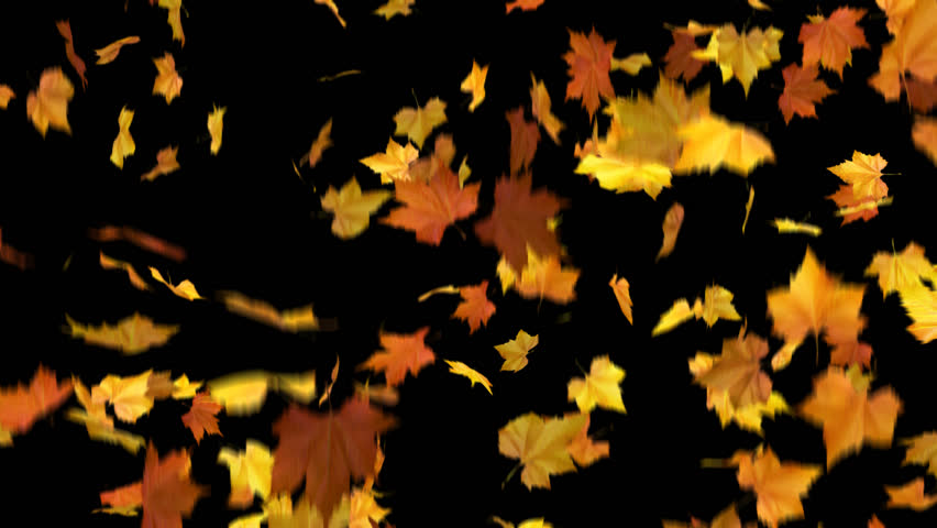 falling leaves - looped and masked 3d animation