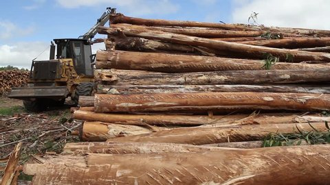 ARAUCANIA, CHILE - DEFORESTATION SITE - A Caterpillar offloads a bunch of tree trunks on a neat pile in a clearing of the forest.