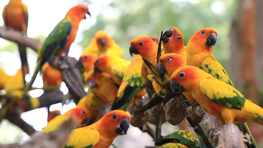 Cute Parrot Wallpapers, PK691 100% Quality HD Cute Parrot Pictures ...