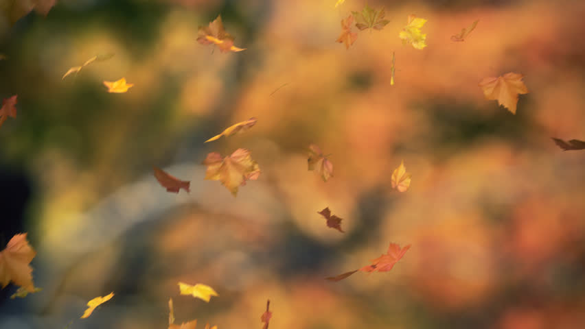 falling leaves blowing in the wind 03 - looped and masked