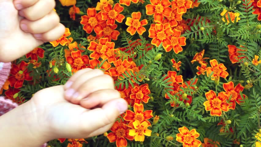 childrens hands touching set of small orange florets close up