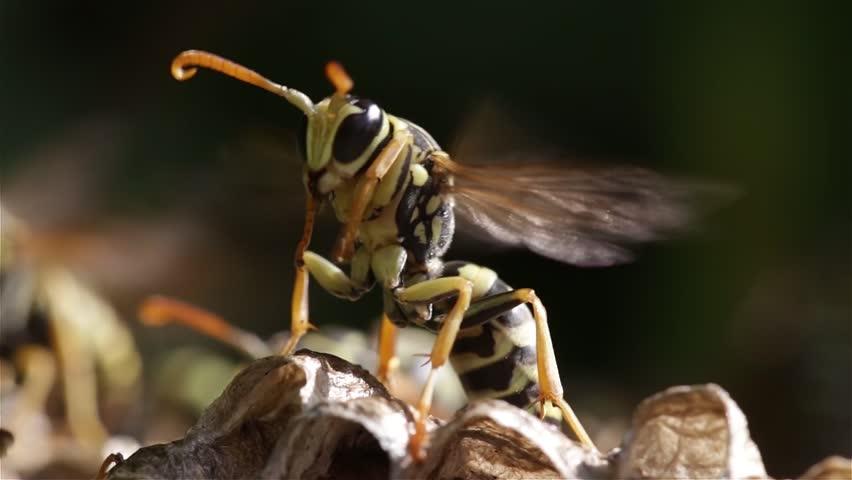 Header of wasp