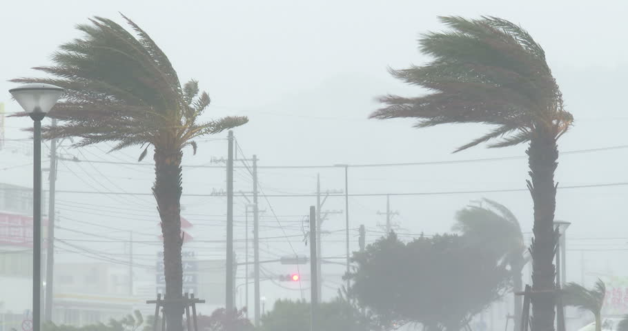 OKINAWA, JAPAN - OCTOBER 2014: Hurricane Eyewall Wind Rain Lash Palm Trees. Palm trees thrash in strong wind and torrential rain of a hurricane eyewall. Originally shot in 4K on Sony PXW Z100