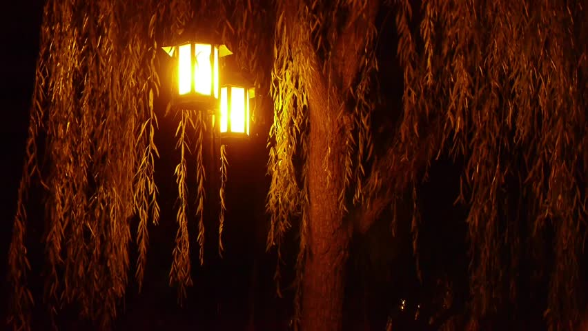 Willow Tree Street Lights At Quiet Night Gh2 03719 Stock Footage Video 7856278