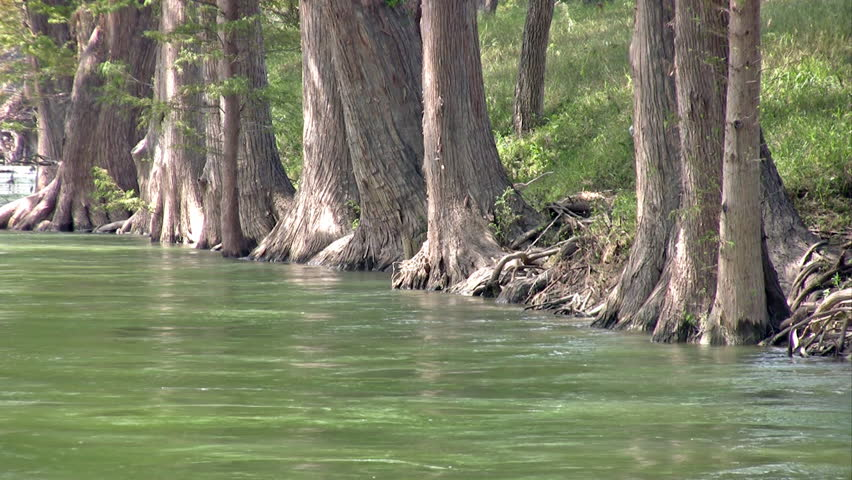 Video of a south Texas river lined with Cypress trees. Base of trees and trunks. Flowing water under canopy of limbs and branches. Beautiful scenery.
