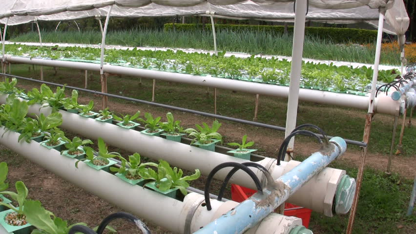 Hydroponic Farming Agriculture