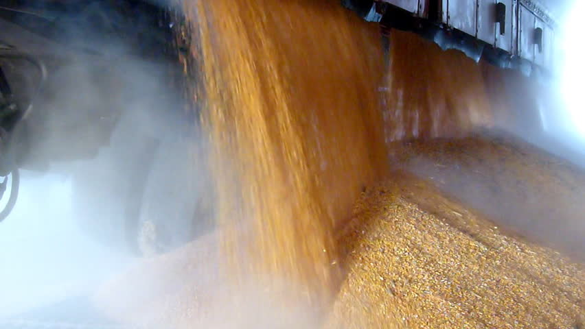 Unloading corn grain from the tractor trailer in a silo after harvest, slow motion | Shutterstock HD Video #7959466