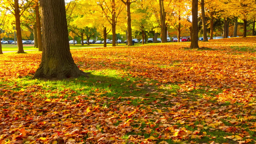 City Park In Autumn Free Stock Photo - Public Domain Pictures