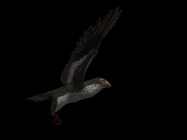 3D Falcon Hawk fly Motion Graphics (alpha channel) #8600038