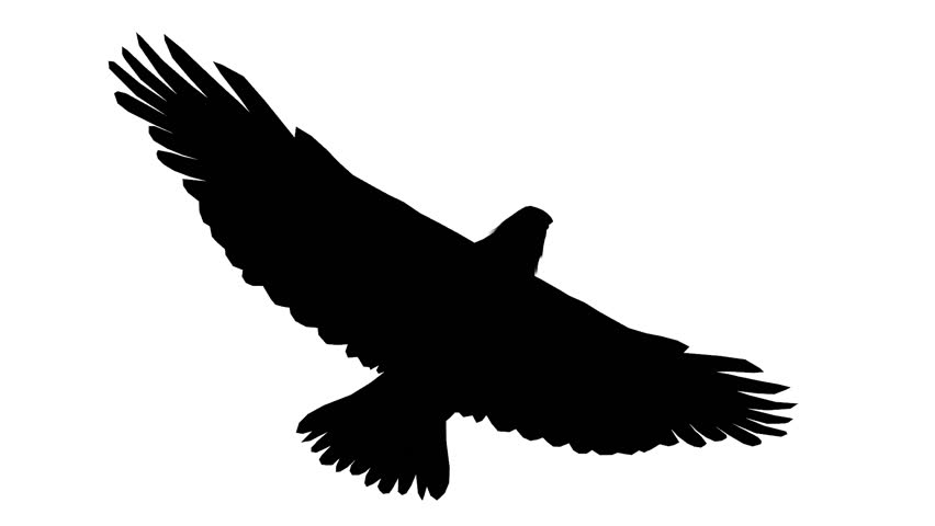 Loop Animated Flying Sketch Eagle On Isolate White Stock ...