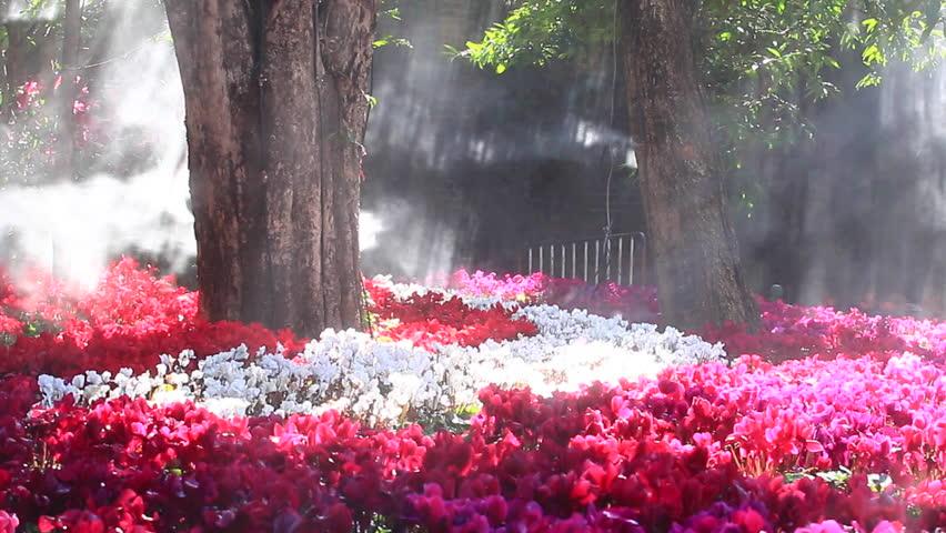 vídeo stock de flower garden cyclamen flowers 1920x1080 100