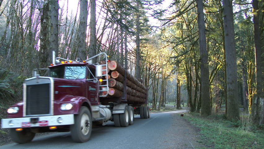 Logging truck with full load of fresh cut timber driving up forest road in Pacific Northwest, Oregon.