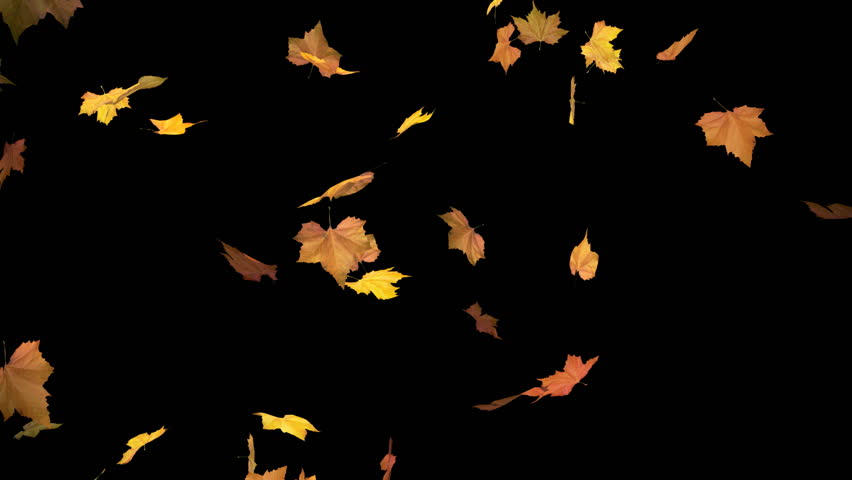 Falling leaves - alpha masked and looped cg animation