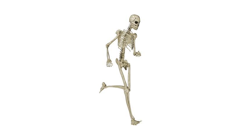 Image result for running skeleton
