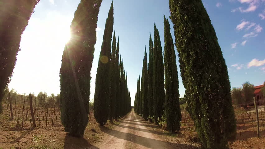 Road with cypress in Tuscany