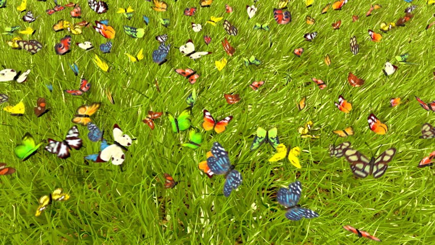 Spring Butterfly : 3D animation
