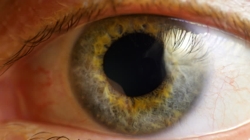 Extreme close up human eye iris in 4K UHD video. Human eye iris contracting. Extreme close up. 4K UHD 2160p footage. #9215348