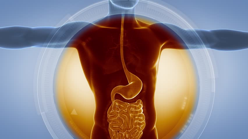 Medical anatomy scan STOMACH and GUTS in loop