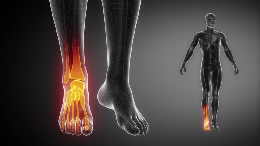 Stock Video Clip Of Ankle Joint Skeleton X Ray Scan In Black