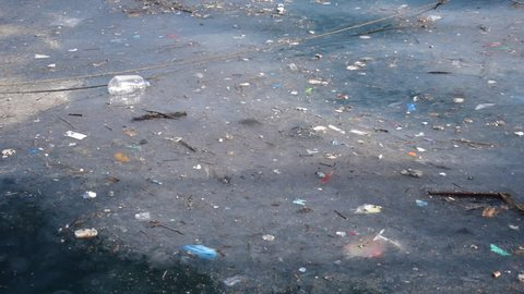Sea pollution and jelly fishes on surface of wavy dark green sea water