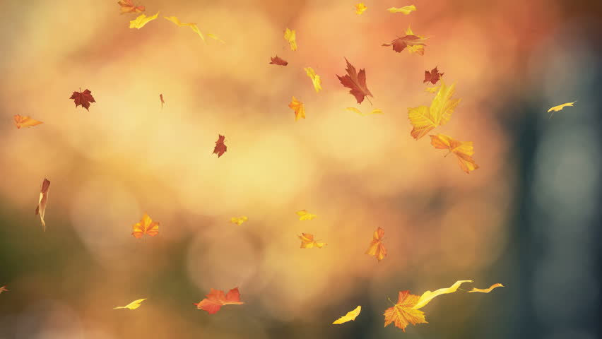 Falling autumn leaves backgrounds - loopable