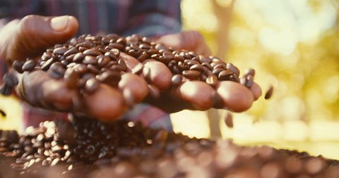 Aromatic roasted coffee beans being held over a bag, hands testing quality in slow motion